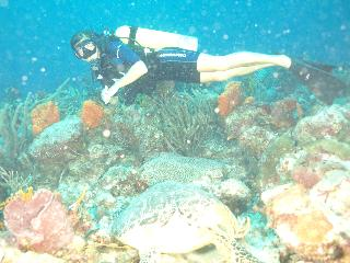 Scuba Diving Sonographer