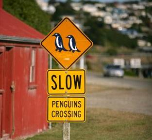 new_zealand_penguin_sign